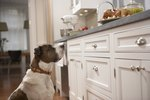 Why Do Dogs Hide Their Food?