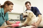 How to Clean and Care for a Dog's Incision