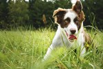 The Best Dog Breed for a Small Ranch