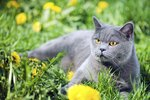 List of Safe Herbs for Cats