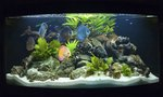 how-aquarium-fish-mate