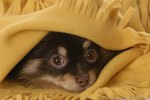 Why Do Dogs Hide Under Beds?