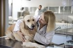 Swallowing Problems in Dogs
