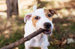 How to Stop Dogs From Chewing Wood