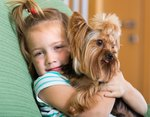 Types of Yorkie Breeds