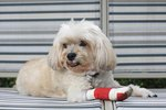 How to Care For A Dog With A Torn ACL Injury