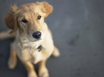 Can You Really Get Food Stamps for Pets?