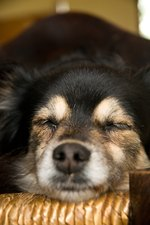 What Does It Mean When Your Dog Whimpers While Sleeping?
