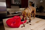 Chocolate Poisoning Symptoms in Dogs