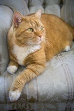 Facts on Orange Tabby Cats