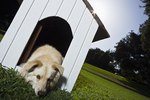How to Build a Winterized Dog House for Cold Weather