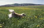 Why Is Your Dog Wheezing?