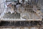 Dog Diseases Caused by Bird & Rabbit Feces