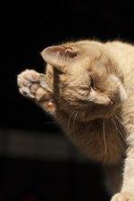Shaking Head Symptoms in Cats