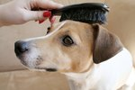 Hairball Remedies for Dogs