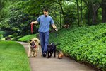 How Much Do I Pay a Pet Sitter?