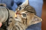 How to Take Care of a Newborn Kitten Without a Mother