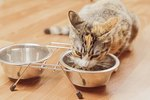 The Best Food for Older Cats