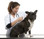 What Part of the Body Should Dog Vaccines Be Given?