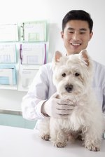 Cephalexin Usage for Dogs