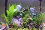How to Clean Artificial Aquarium Plants