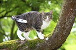 The Best Cat Repellents