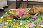 Happy Piglets Romping On A Warm Blanket Will Make You Squeal