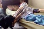 """Doggy Alarm Clock """"Helps"""" Sleepy Head Wake Up"""