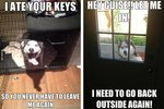 22 Hilarious Memes For Anyone Who Loves Huskies