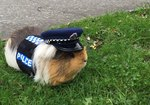New Zealand's Toughest Cop Promises To Bring Paw & Order