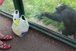 Chimp Asks Zoo Visitor For A Hilarious Favor