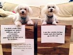 Dog Eats Larabar, Sends Self and Sister to ER