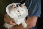 How to Make a Soft Elizabethan Collar for Cats