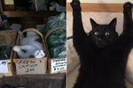 16 Signs Your Cat Is Hooked On That Catnip