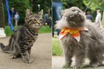 Everything You Need To Know About The Best New Cat Trend, 'First Caturday'