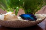 How to Entertain Your Betta Fish