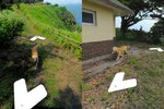 This Mysterious Dog Appears All Over Street-View Maps