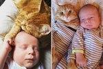 Sweet Orange Tabby Nurses Baby Back to Health