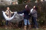 Rescuers Wait For Days To Save Stubborn Stray Stuck In Tree