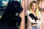 Help Name Hilary Duff's Handsome New Rescue Puppy
