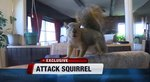 Hero Squirrel Attacks Burglar, Saves the Day