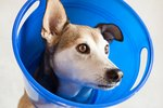 How to Make a Dog Head Cone to Prevent Wound Licking