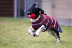 Scottish Grandmas Knit Sweaters To Help Black Dogs Get Adopted
