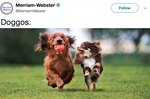 Merriam-Webster Tweeted About the Word Doggo & The Internet Responded Appropriately