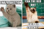 15 Things Your Cat Would Ask If She Could Ask Questions