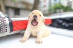 This City Officially Has The Cutest Police Force In The World