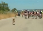 Enthusiastic Doggo Casually Out Sprints Cyclists During Italian Bike Race