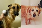 31 Sad-Eyed Puppies Who Will Never Ever Forgive You For Bath Time