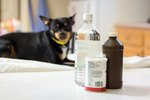 How to Use Vinegar to Get Skunk Smell Off of a Dog