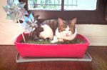 How To Make A Mini-Indoor Garden For Your Cat